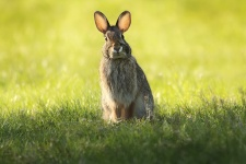 bunny-rabbit-portrait